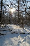 Winter sun. Winter forest. Sunny day. Hard frost Stock Photo
