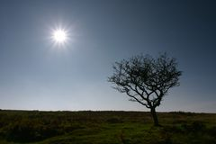 Winter sun. A wintery sun on Dartmoor, UK Stock Photography