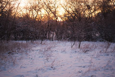Winter sun behind the trees, Soft color, frosty morning, stock image