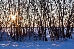 Winter sun breaking through naked tree in snow Stock Photography