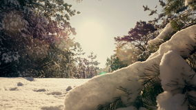 Winter sun breaks through the snow-covered fir branches. Pine branch in snow. Winter sunset in the forest stock video footage