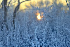Winter sun Royalty Free Stock Photo