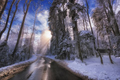 Winter Sun, der Abflussrinne Snowy-Bäume emporragt Lizenzfreie Stockfotografie