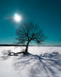 Winter Sun and dramatic tree shadow Royalty Free Stock Images