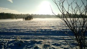 Winter Sun. Forest, White, Snow, Germany, Wandlitz royalty free stock image