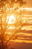Winter by the sun, golden sun rolling behind branches of the tree, scenic clouds and sunset sky backdrop. Phukhieo, Thailand. Winter by the sun, golden sun royalty free stock photography