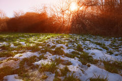 Winter sun Stock Images