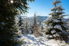 Winter sun illuminates the snow-covered slopes Royalty Free Stock Images