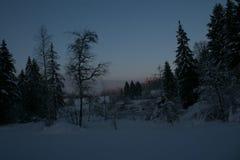 Winter Sun-Landschaft Lizenzfreie Stockbilder