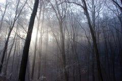Winter Sun-Licht kommt durch gefrorenen Forest Trees Stockfoto