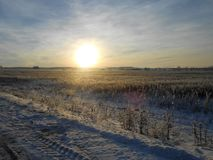 Sundown over the frosty field. Winter sun over the frosty fields goes to horizon. Frosty stems across the space. Sky with the haze Stock Images