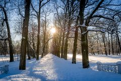 Winter sun in park Stock Photography
