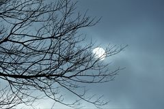 Winter Sun Passing Through Clouds Behind Bare Trees Stormy Sky. Gray and stormy version of winter sun passing through clouds behind bare tree branches Royalty Free Stock Image