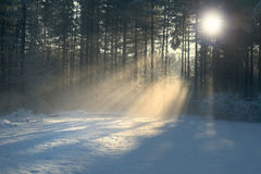 Winter Sun Rays Stock Photos