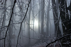 Winter Sun Rays Are Coming Through the Frozen Trees Royalty Free Stock Photos