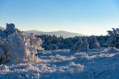 Winter sun rays falls on frozen trees Stock Photo