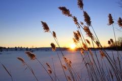 Winter sun set Royalty Free Stock Images
