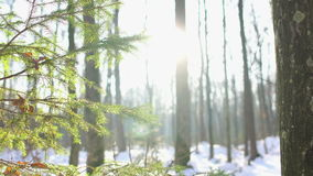 Winter Sun Shining Through Trees, Dolly stock footage