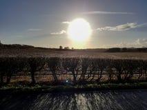 Winter Sun in the sky. The pale winter sun shines over a farmers field in Wigan Stock Image