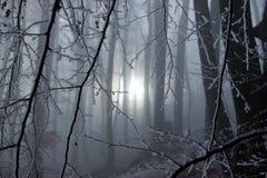 Winter Sun-Strahlen kommen durch die Frosen-Bäume Lizenzfreie Stockfotos