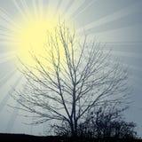 Winter sun theme tree Royalty Free Stock Photos