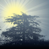 Winter sun theme tree. Shining winter sun with meadow flowers and tree on the background Royalty Free Stock Photos