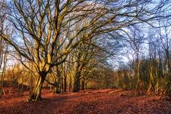 Winter sun tree Stock Images
