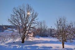 Winter sun among trees. Piedmont, Italy. Royalty Free Stock Photo