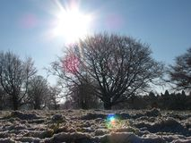 The winter sun Stock Photography