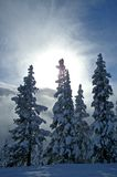 Winter Sunburst Royalty Free Stock Photography