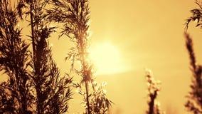 Winter suncet stock video footage