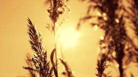 Winter suncet stock footage