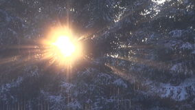 Winter sunlight and forest fir background stock video footage