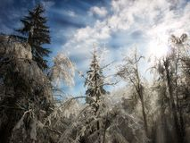 Winter sunlight Royalty Free Stock Photos