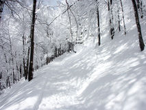 Winter. Sunlit forest covered with snow Stock Image