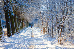 Winter sunny alley Stock Images