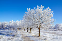 Winter sunny day. The road leading into the woods, winter sunny day Royalty Free Stock Photos