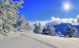 Winter sunny day. Spruce trees covered by snow in beautiful winter landscape Stock Images