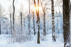 Winter Sunny day in snow Park. Falling snowflakes glare in direct sunlight, streaming through snow covered trees. Consequences of snowfall in urban environment Royalty Free Stock Images