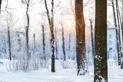 Winter Sunny day in snow Park. Falling snowflakes glare in direct sunlight, streaming through snow covered trees. Consequences of snowfall in urban environment Stock Image