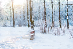 Winter Sunny day in snow Park. Falling snowflakes glare in direct sunlight, streaming through snow covered trees. Selective focus on snowflakes, blurred Royalty Free Stock Image