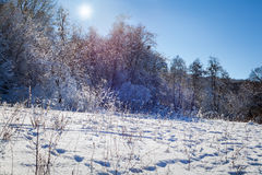Winter sunny forest Stock Photo