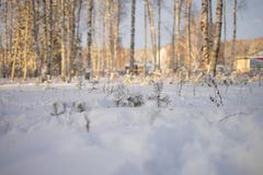 Winter sunny and frosty morning in the forest royalty free stock image