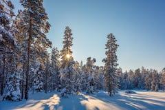 Winter Sunny Landscape mit schönem Schnee bedeckte Bäume Lizenzfreies Stockbild