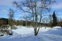 Winter  sunny landscape in Pavlovsk  garden. Stock Photo