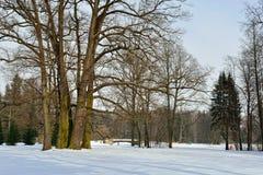 Winter  sunny landscape in Pavlovsk  garden. Stock Image