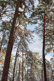 Winter sunny landscape Stock Photography