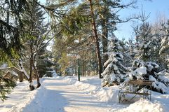 Winter Sunny Park Royalty Free Stock Photo