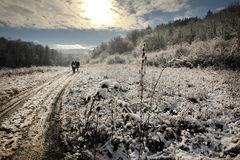 Winter sunny road in snowy forest landscape Stock Image