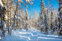 Winter sunny weather in forest with lots of snow and path Stock Photo